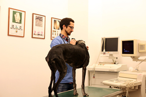 Veterinair Bureau de la Cambre - Parasieten & Preventie
