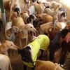 Cabinet Vétérinaire de la Cambre